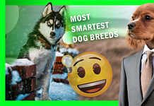 Top 15 Most Smartest Dog breeds in 2020 May Actually Be Perfect for You